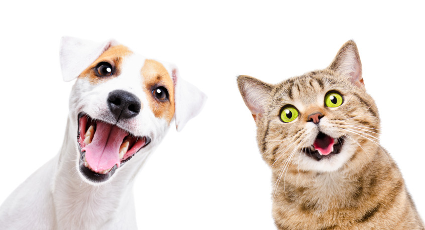 A customer management and CRM module that gives you valuable insights on your customers for pet groomers, dog walkers, pet sitters, kennels, veterinarians and more.