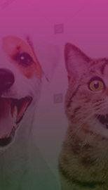 Websites and other tools for pet groomers, veterinarians, dog walkers, pet sitters, kennels and other pet specialties